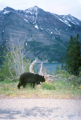 young Black Bear, St. Mary Lake, and Red Eagle Mountain